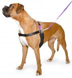 Ancol Harness, Lead and DVD  7-8 Large
