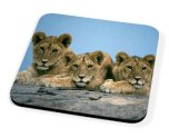 Kico Animal Coaster - Lion Cubs