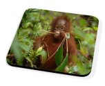 Kico Animal Coaster - Monkey In Trees