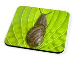 Kico Animal Coaster - Snail