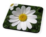 Kico Flower Coaster - Daisy